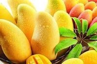 吃芒果,选全熟的