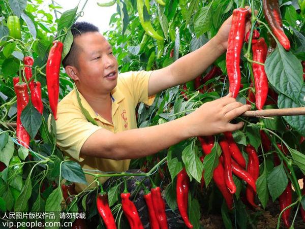 吃辣椒还能降低死亡风险?这几类人最好别吃