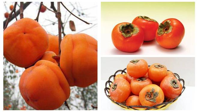 """柿子被称为""""果中圣品"""" 秋季吃柿子应该注意啥?"""