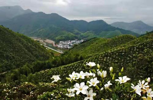 http://www.bjhexi.com/jiankangyangsheng/1135592.html