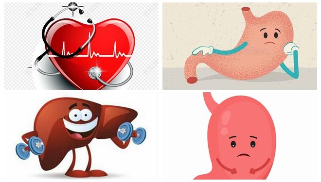 为了让你好好生活,你知道身上器官多努力吗?